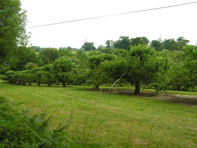 An Orchard near Capel