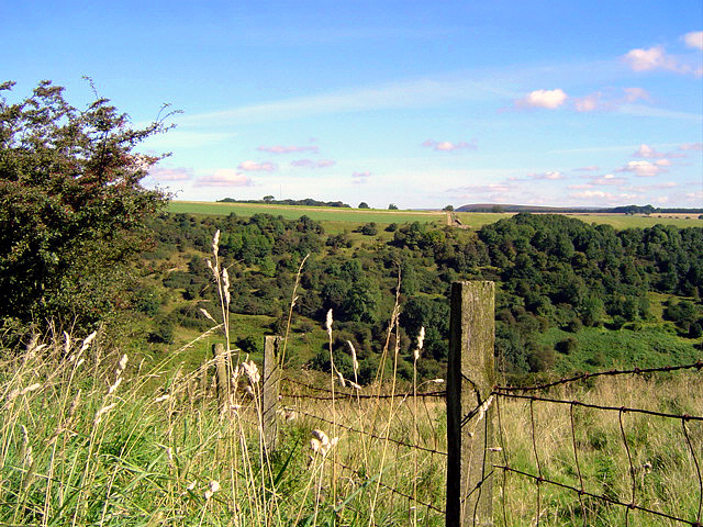 Towards Murton Wood
