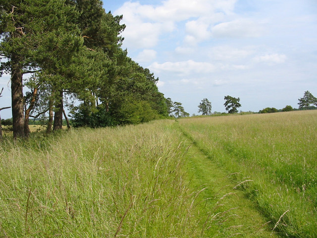 Downland field  Down farm Dorset