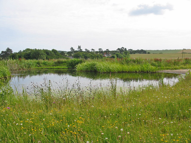 Pond at Down Farm Cranborne Chase, Dorset