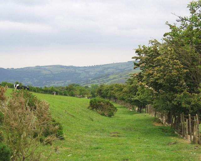 Path on south west of Y Foel