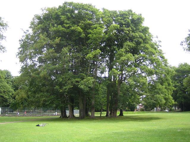 Luton: Wardown Park