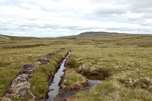 Long line in the peat