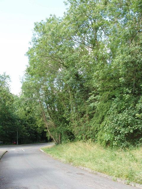 Trees at Littleworth