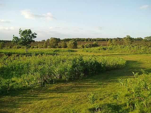 Westleton Heath
