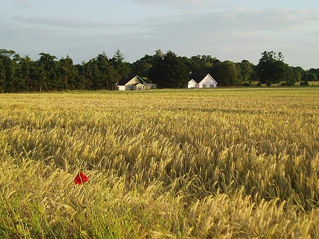 Midsummer's day near Theberton