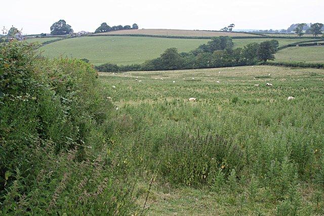 Undergrazed Field