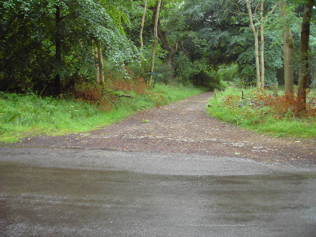 Track in Savernake Forest