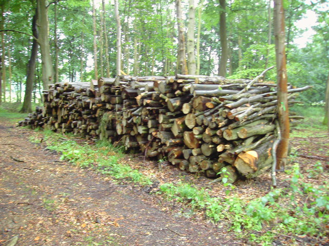 Wood pile in Savenake Forest