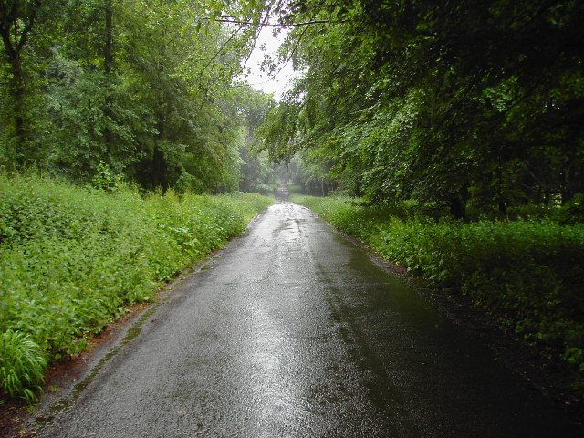 Grand Avenue, Savenake Forest