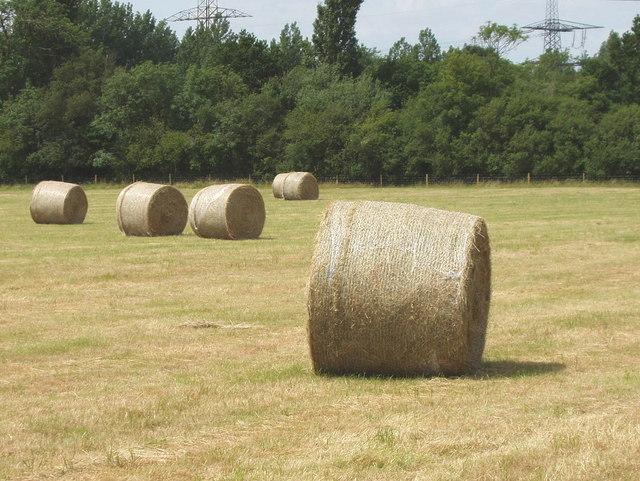 Hay bales near Toot Baldon