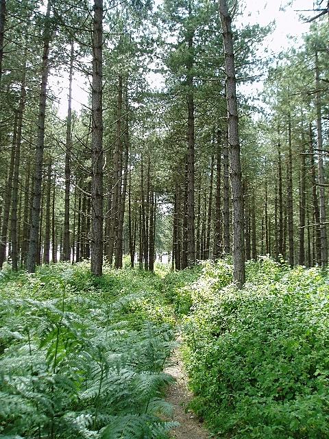 Dunwich Forest