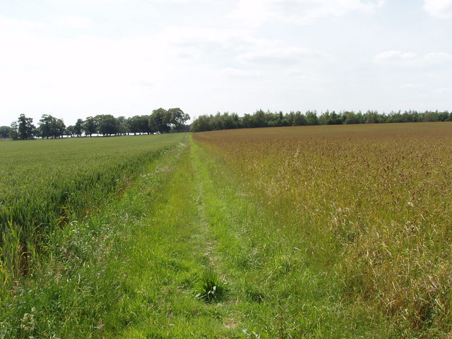 Path between hay and wheat, near Toot Baldon
