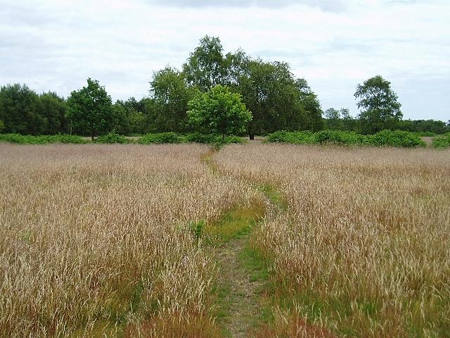 Path through the grass