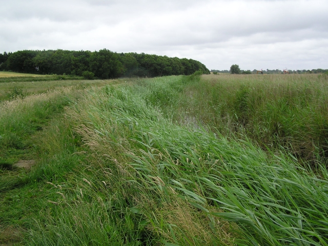 Footpath and fen, near How Hill