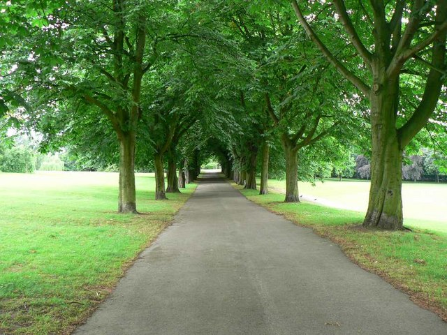 Avenue of trees, Clarence Park, Wakefield