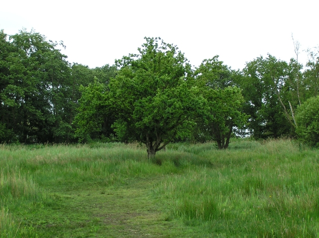Oak in grazed fen, How Hill
