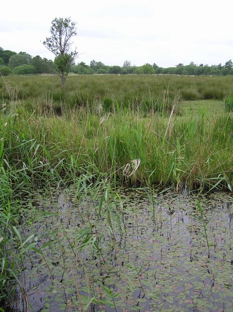 Grazed marsh, How Hill