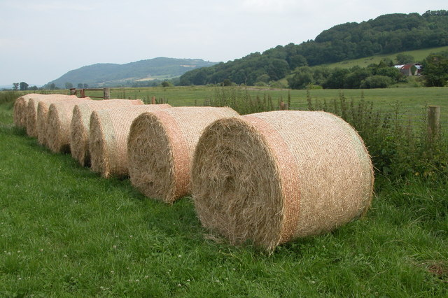 Hay Bales near Locksters Pool Farm
