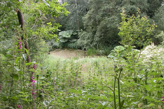 Pond near Brilley Court Farm