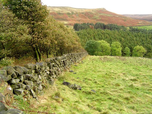 Field Walls