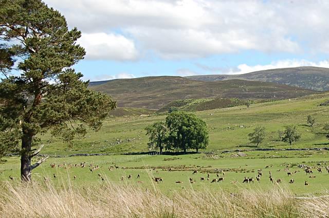 Farmland at Wester Aberchalder