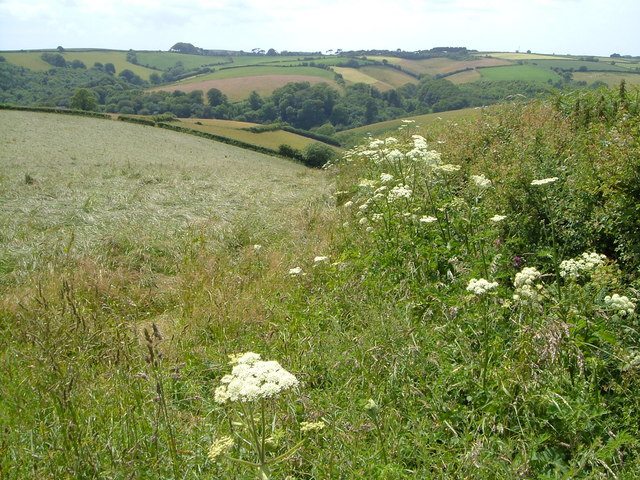 View from the lane near Cotton