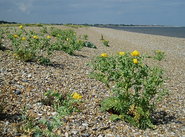Shingle beach north of Dunwich