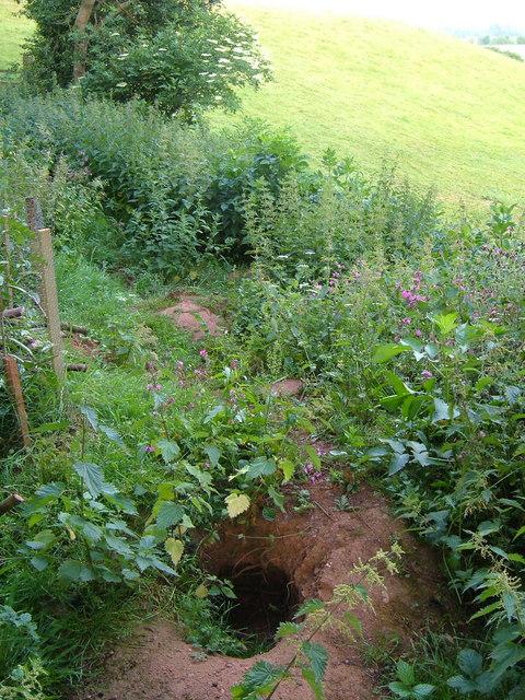 Badger sett, Wyke Hill