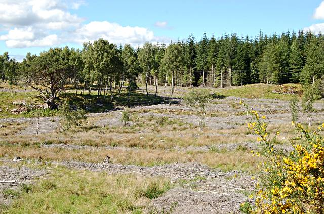 Harvested forest near Aultnagoire