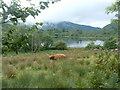 NN0247 : Loch Baile Mhic Chaillein by Alan Stewart