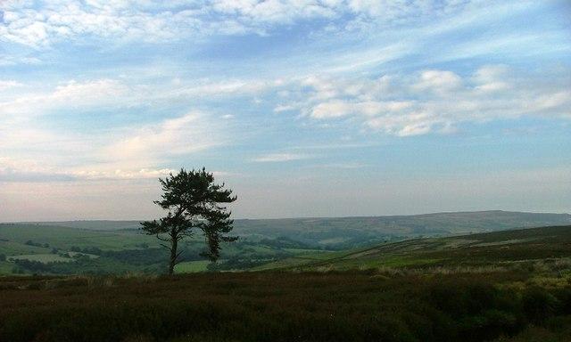 Above Middle Heads, Egton High Moor