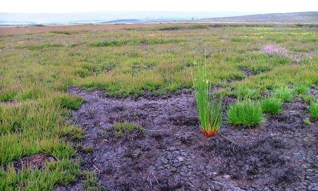 Dried up Peat Bog, Murk Mire Moor