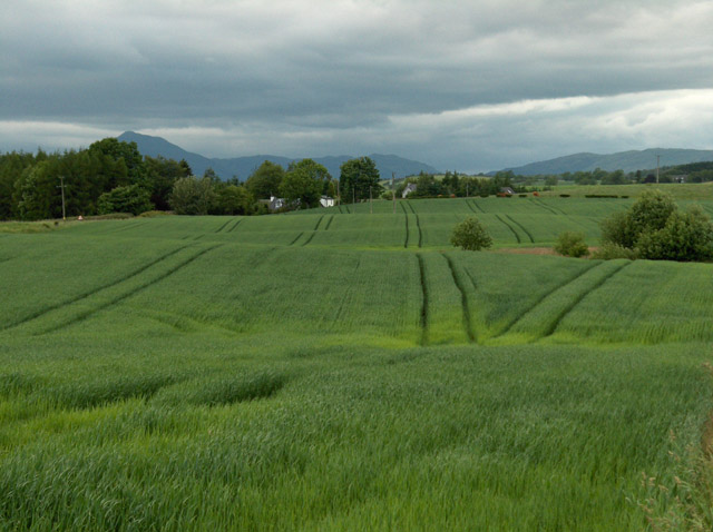 Farmland, Wester Spittalton