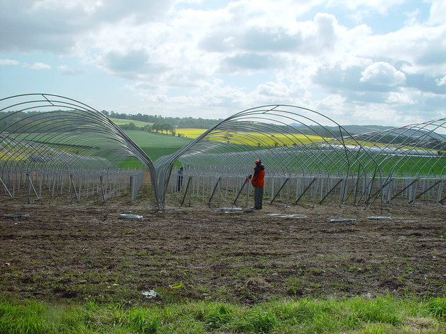 Setting up polytunnels for strawberry growing, West Craigie Farm