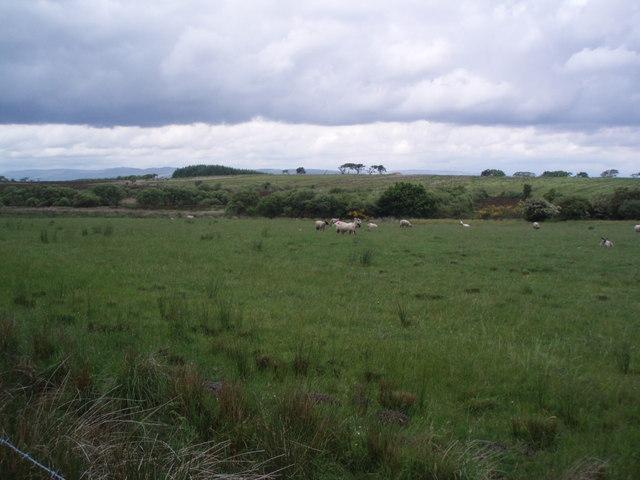 Sheep Farming Falkirk District