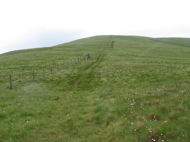 Whitehope Heights