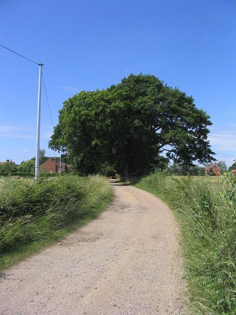 Tree-lined drive, East Hanningfield