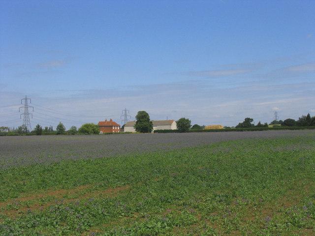 Fields of blue - Patten's Farm