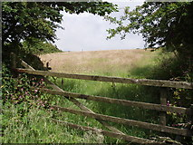 SW6930 : Meadow near Manhay by Sheila Russell
