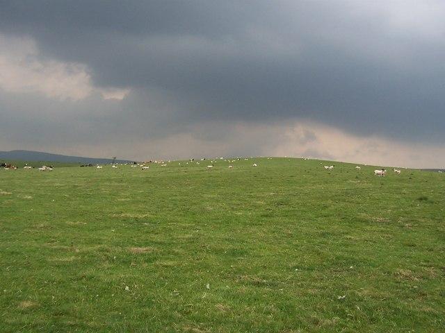 Pasture on Calton Moor