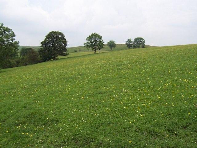 Pasture west of Cowper Cote