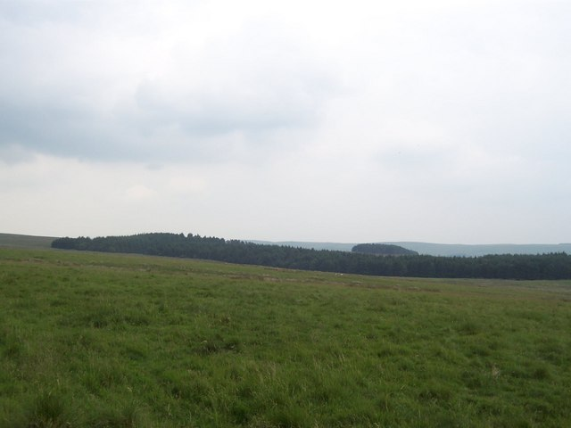 Wye Plantation
