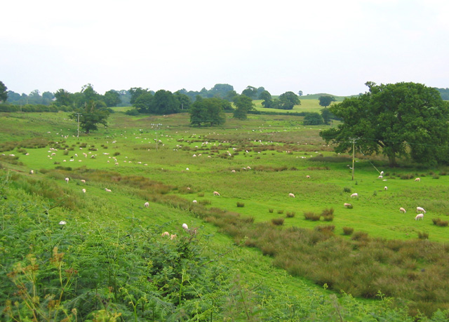 Sheep pasture by Quoisley Little Mere