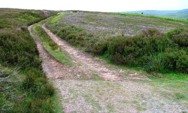 Track to Hazel Head