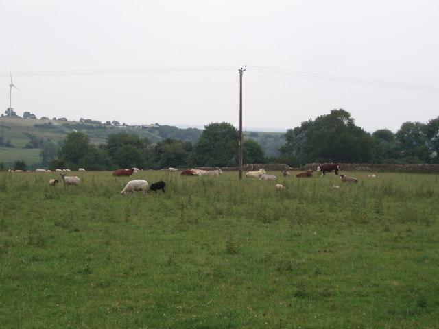 Livestock scene