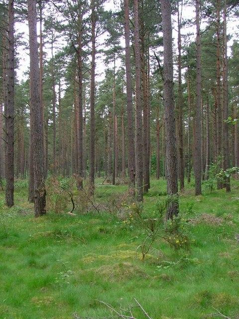 Plantation, Wester Kerrowgair