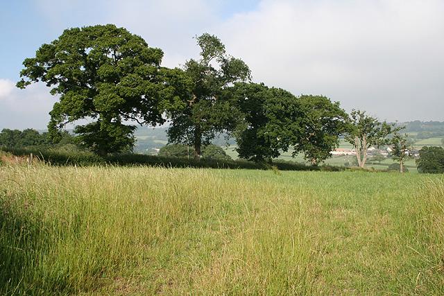 Luppitt: near Whitehall Farm