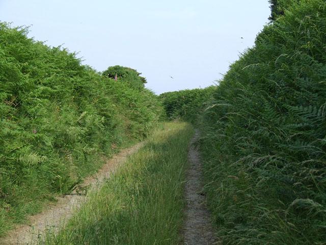 An overgrown lane