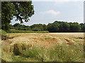 SP9200 : Ripening barley, Hyde Heath by David Hawgood